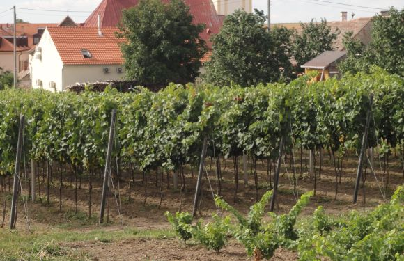 Czech Wine Travel = Affordable and Delicious