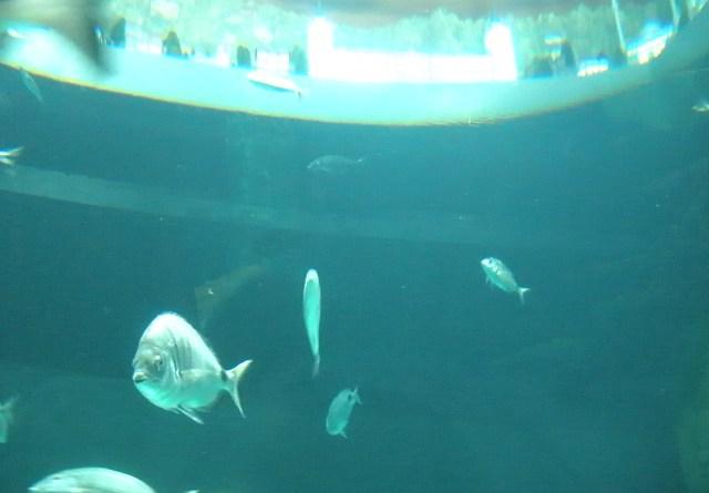 Istanbul Aquarium Fishtanbul