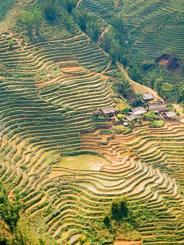Hmong farm