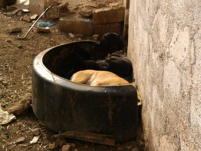 Moroccan Doghouse
