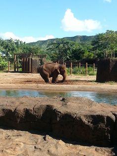The Sadly Dilapidated Honolulu Zoo