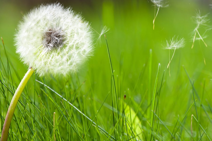 spring allergies. The symptoms of spring allergies include, Runny nose ...