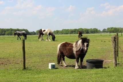 De appartementen hebben uitzicht op de paarden