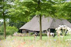 De Hoevens, Alphen (Noord-Brabant)