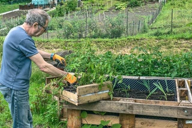 Poireaux et tomates occupent les caissons.