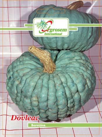 Seminte legume - Dovleac Berettina
