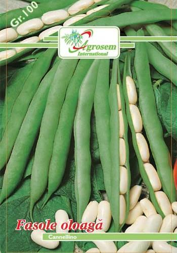 Seminte legume - Fasole Oloaga Cannelino
