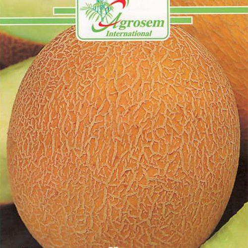 Seminte legume - Pepene Galben Ananas D'amerique