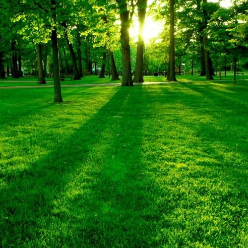 Gazon, seminţe gazon şi seminţe iarbă