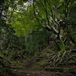 Ruta GRATUITA por los árboles monumentales de la Tinença de Benifassà