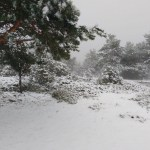 La nieve regresa a la provincia de Valencia