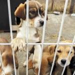 El refugio de animales de Valencia cerrado, para nuevos ingresos, por un brote de moquillo