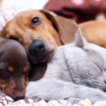 Se presenta la Proposición de Ley a favor de los #AnimalesNoSonCosas
