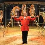 El único circo de toda la Comunidad Valenciana con animales triunfa estas Navidades en Alfafar