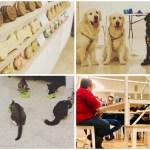 La Fábrica de Huellas, un proyecto novedoso en Valencia donde los peludetes son bienvenidos