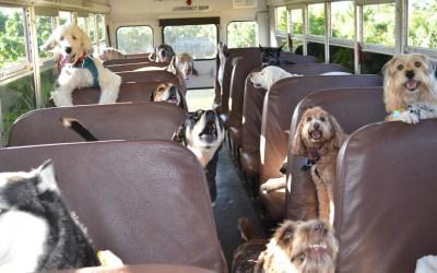 Los animales de compañía podrán viajar en los autobuses de la EMT de Valencia