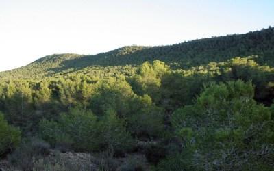 La Sierra Escalona, una joya natural de Alicante, declarada paisaje protegido