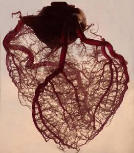 cuore copia