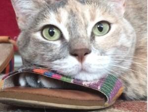 gatto ciabatta