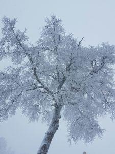 capodanno neve