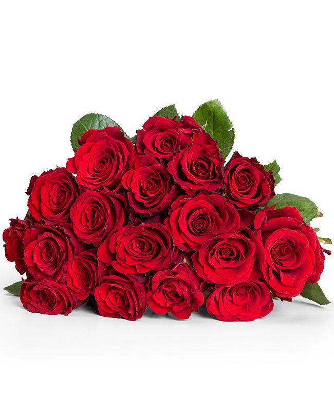 18 rote FairtradeRosen  jetzt bestellen bei Valentins