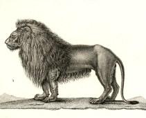 Frédéric Cuvier (1816-1829). Dictionnaire des sciences naturelles. Planches. 2e partie : règne organisé. Zoologie. Mammifères, F. G. Levrault (Paris)