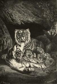 Illustration de Gustav Mützel (1839-1893) tirée d'Alfred Edmund Brehm (1876). Brehms thierleben, allgemeine kunde des thierreichs. Erste Abtheilung. Säugethiere, Verlag des Bibliographischen instituts (Leipzig)
