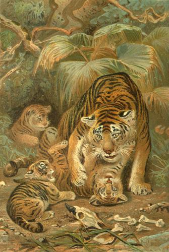 Illustrateur inconnu, planche tirée de Richard Lydekker (1893-1894). The Royal Natural History. Vol. I, Frederick Warne & Co. (Londres)