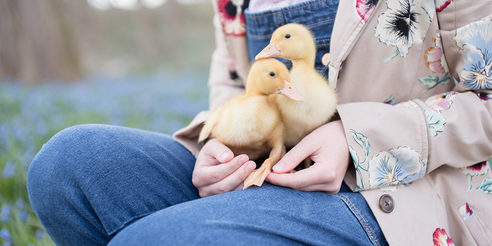 West Michigan senior girl poses with baby ducks in a field. She wears a floral jacket and overalls.