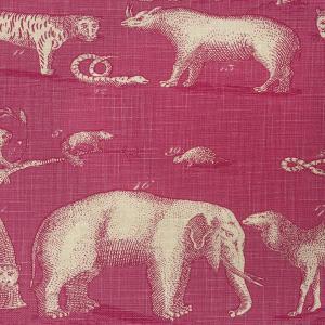 Andrew Martins  Safari