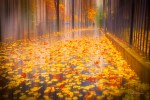 "Fine art prints ""Raining fall"" in Paris"