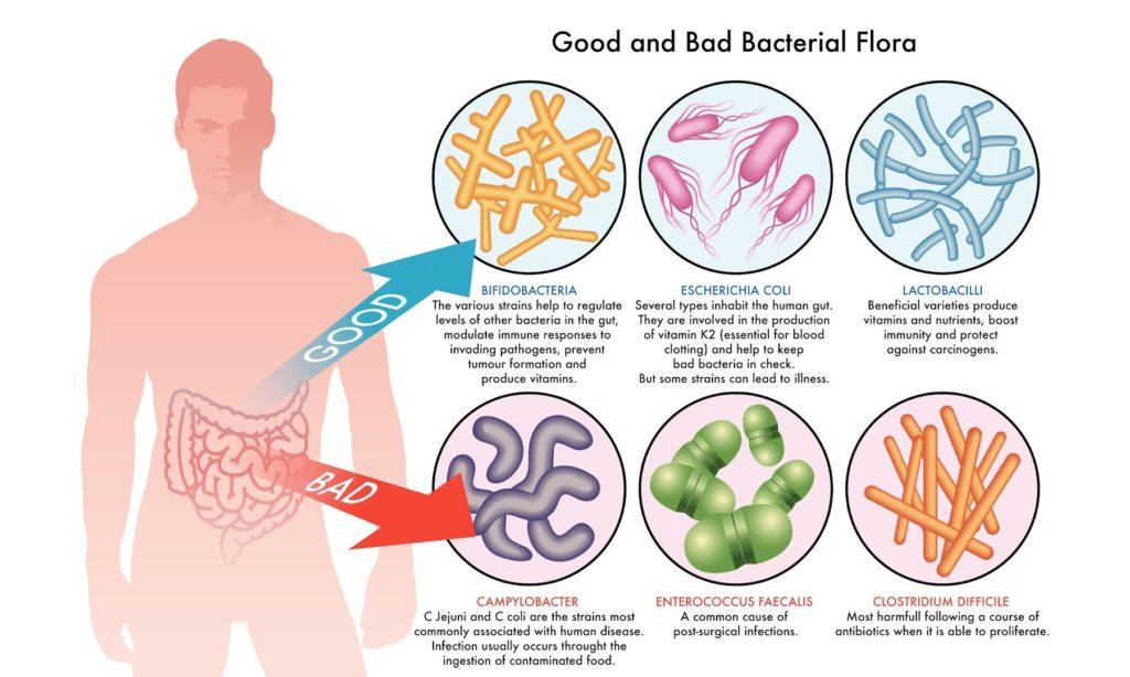 batteri-intestinali-buoni-cattivi