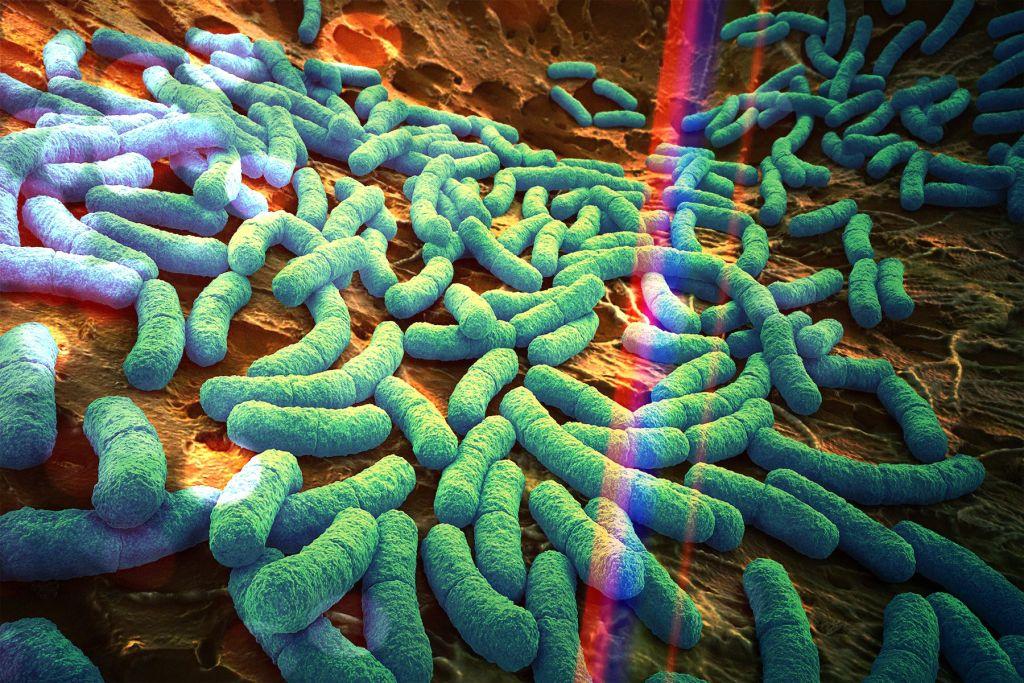 microbioma-guida-definitiva-valerio-rosso