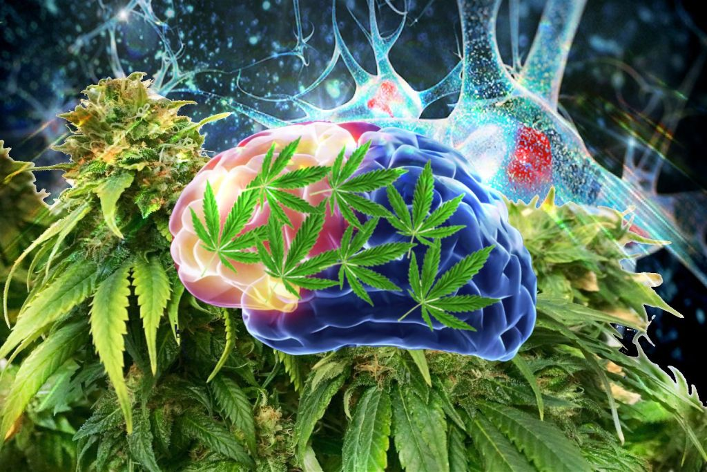 cannabis-thc-cbd-psichiatria-salute-mentale