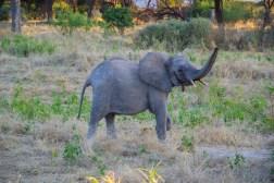 Baby Elephant Ruaha