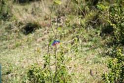 Bug Ngorongoro Crater