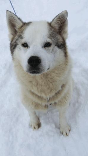 Husky Tour Finland