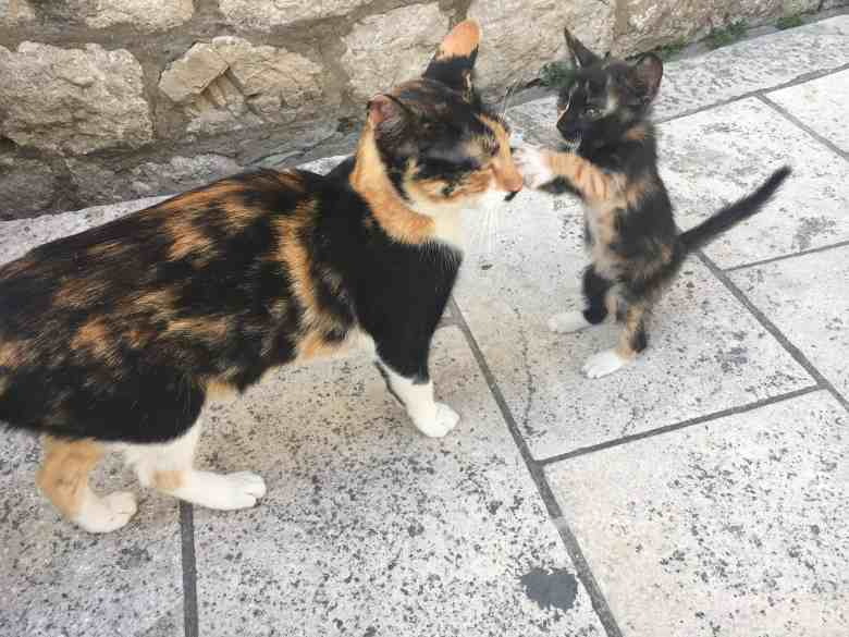Mother cat and kitten playing in Old Town Dubrovnik.