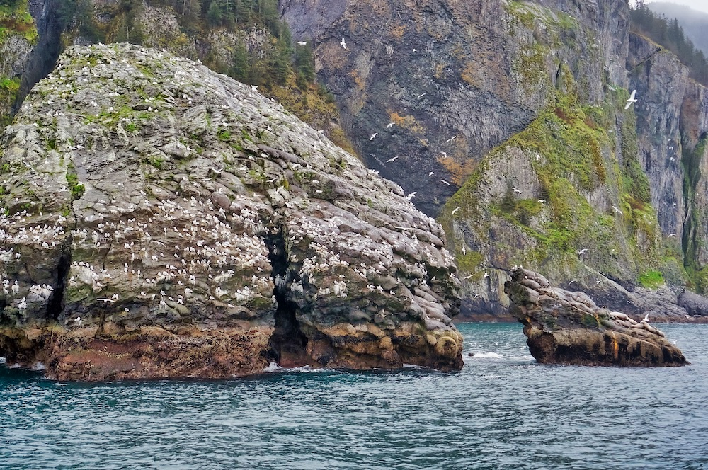 Seabirds and Sea Lions in Kenai Fjords