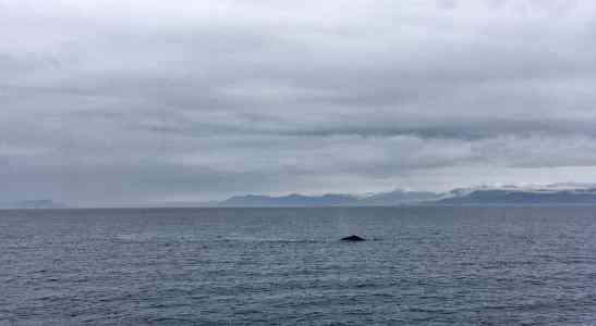 Humpback Whale in Frederick Sound, Alaska