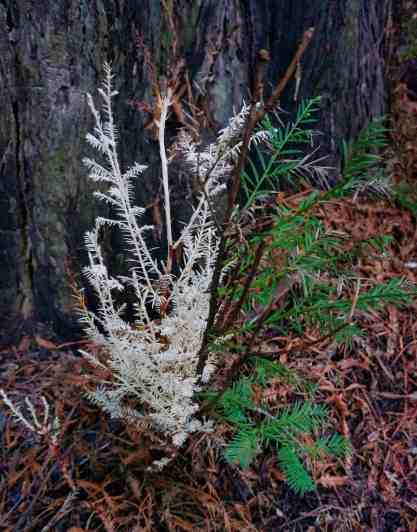 2018 Recap - January - Redwoods