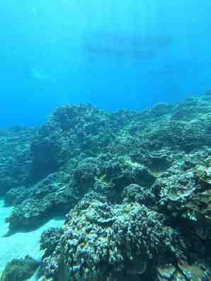 UnCruise Hawaii - Day 4 - Snorkeling