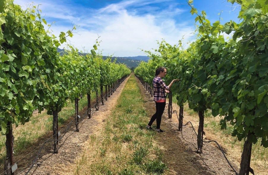 Santa Rosa - Wine Tasting Valerie