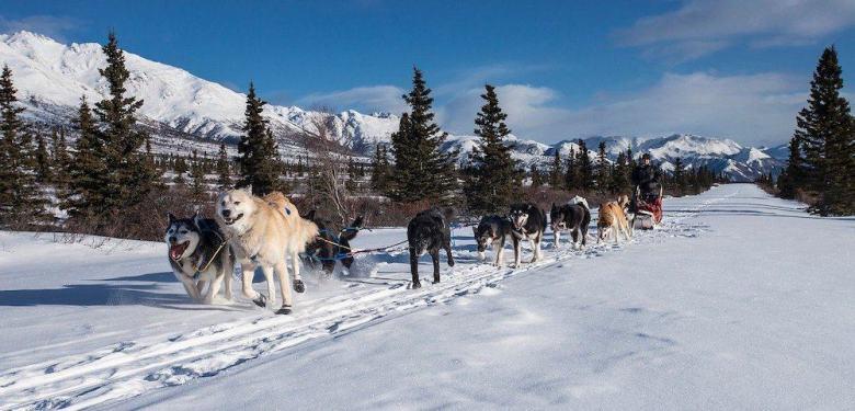 Alaska in Winter - Dogsledding