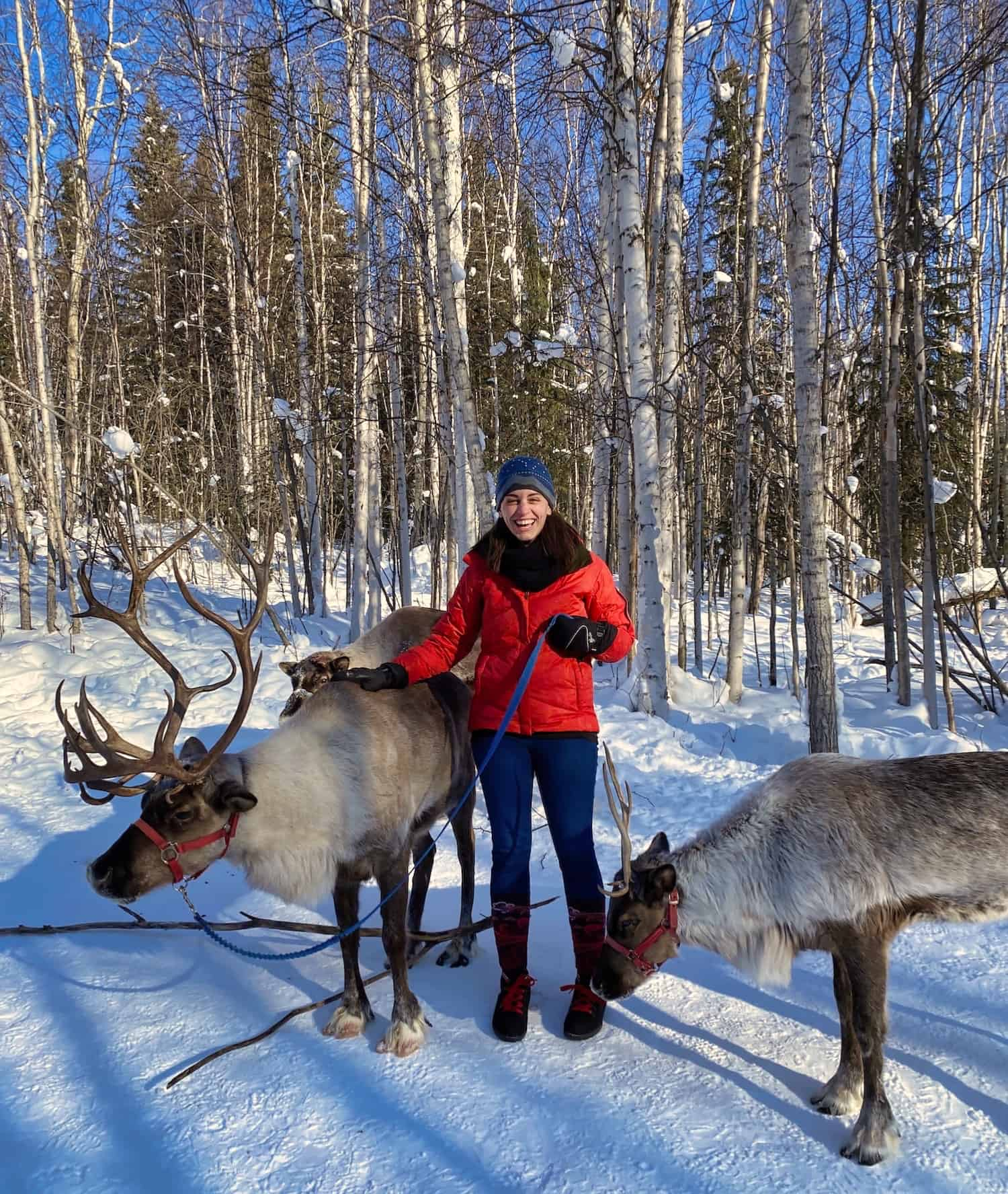 Fairbanks - Reindeer Walk