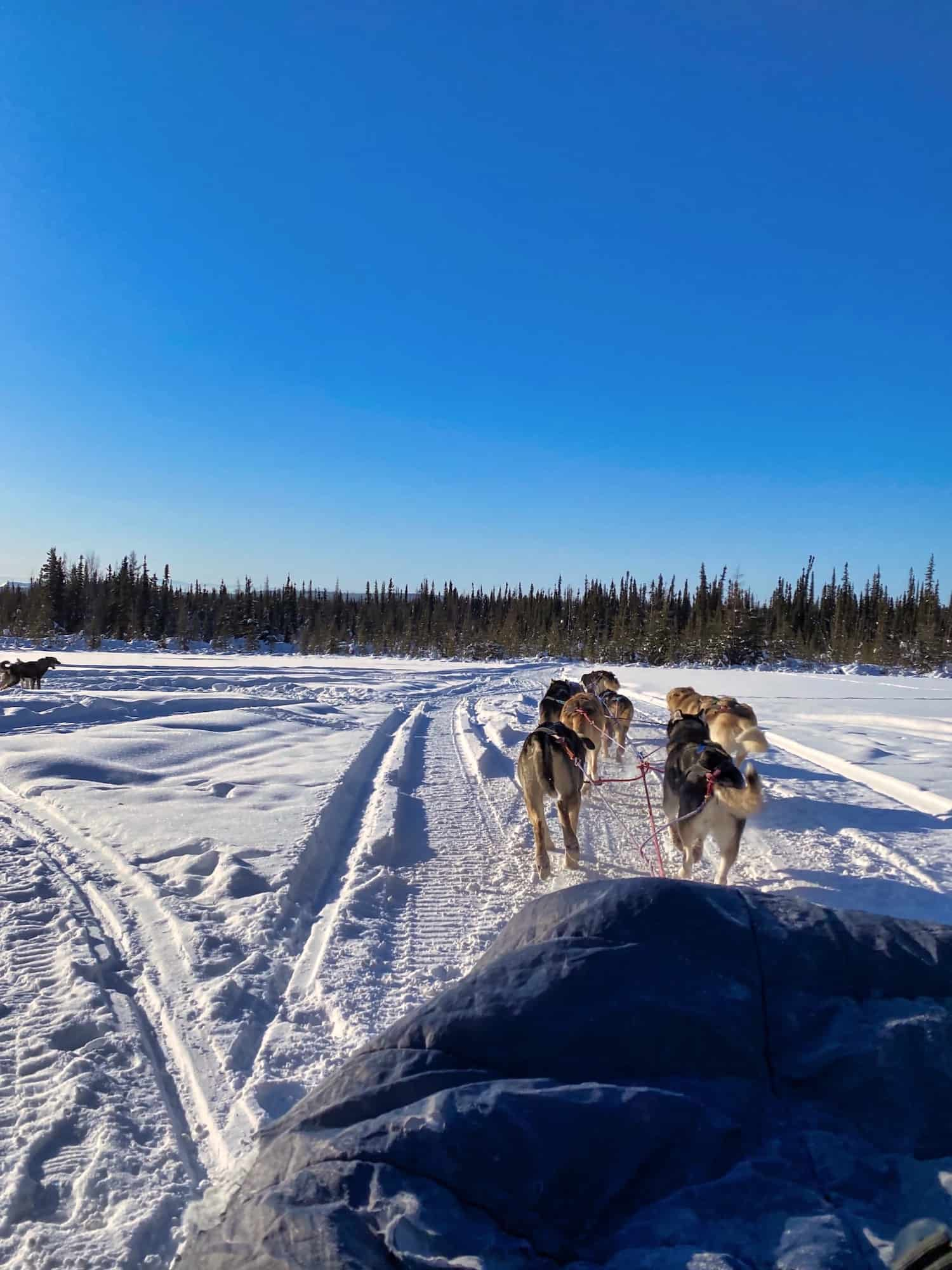 Fairbanks in Winter - Dogsledding