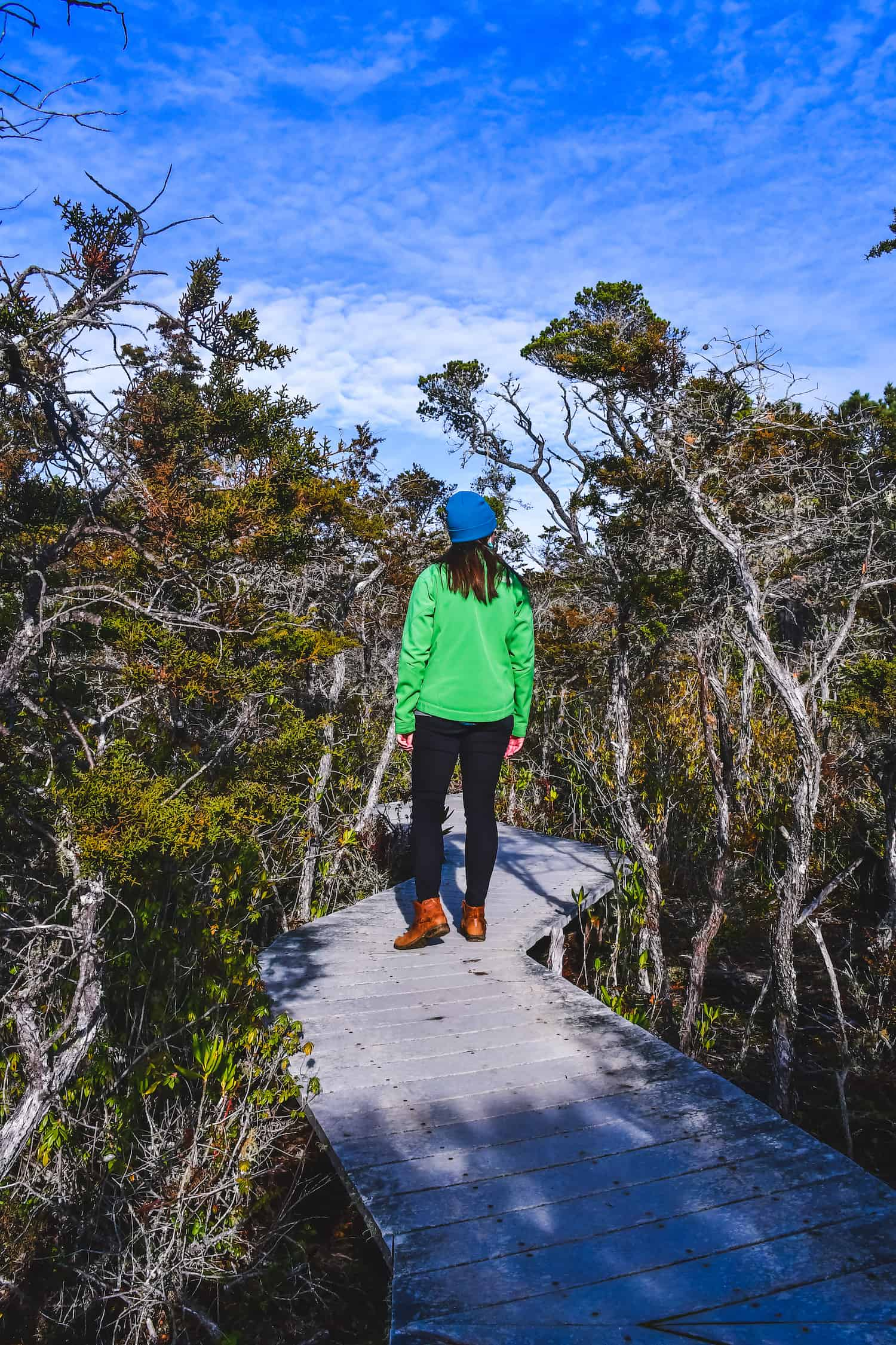 Fort Bragg Trip - Pygmy Forest