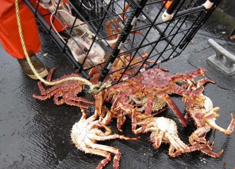Ketchikan Cruise Excursions - Crabbing - Eric Heath via Flickr