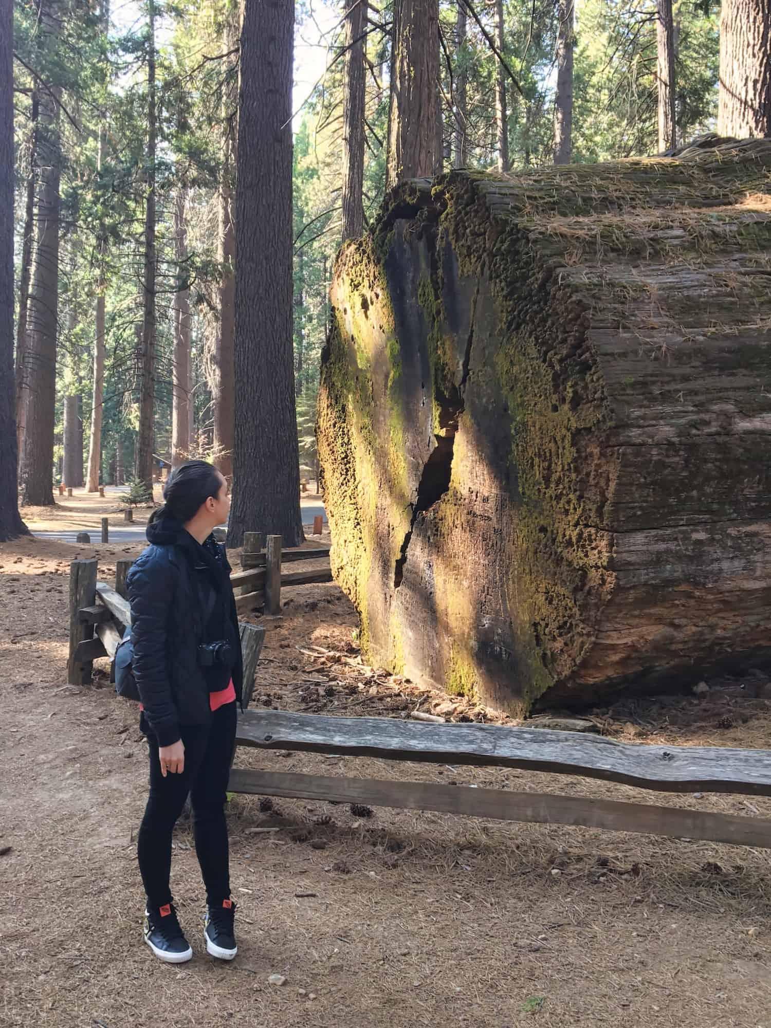 California Road Trip - Sequoias