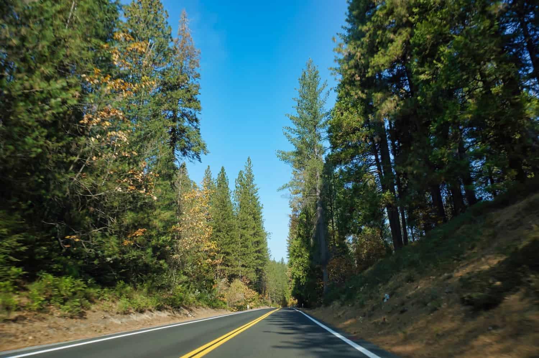 California Road Trip - Sequoias Along Highway